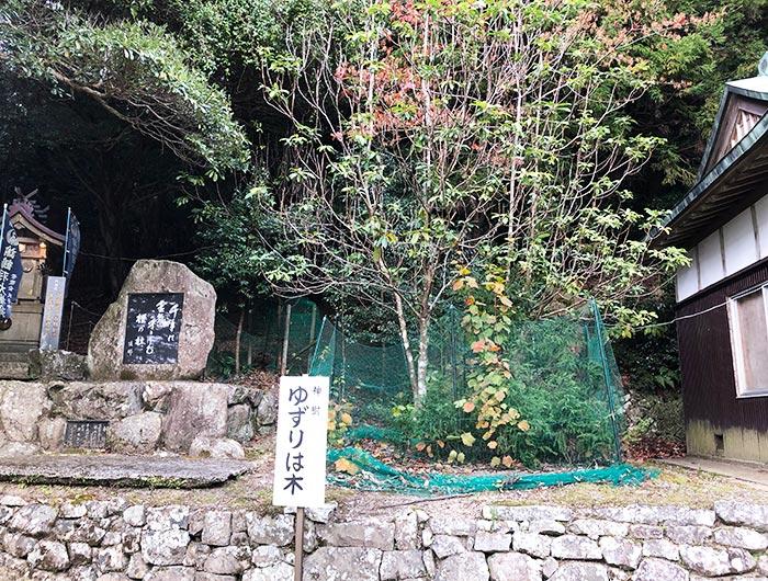 諭鶴羽神社の新樹ゆずりは木