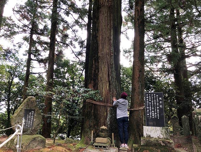 諭鶴羽神社の親子杉