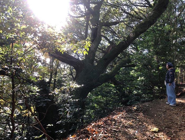 常隆寺の巨木