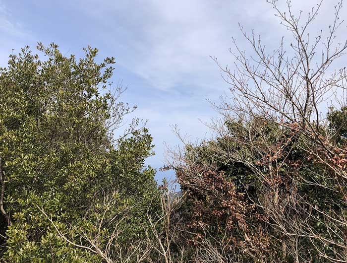 柏原山の展望台(南側)からの眺め