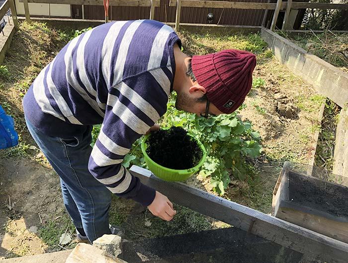 乾燥ひじきを収穫