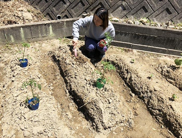 トマトを植える奥さん