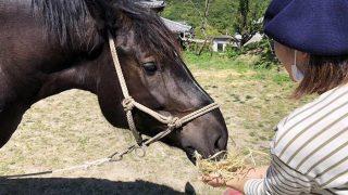 馬の餌やり