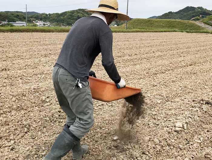 田んぼに堆肥をいれる