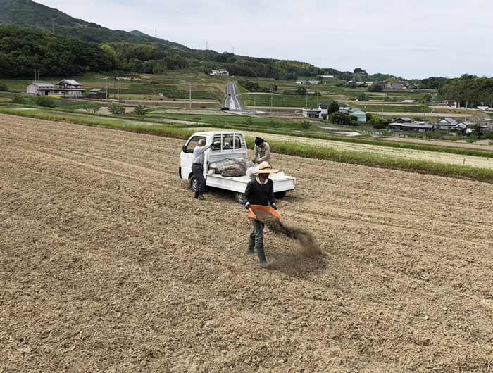 田んぼに堆肥を撒く