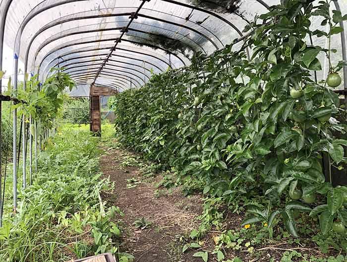 カパンナの菜園