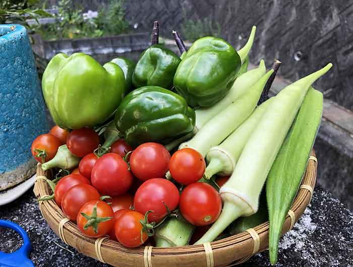野菜モリモリ