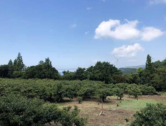 サンカクからの景色