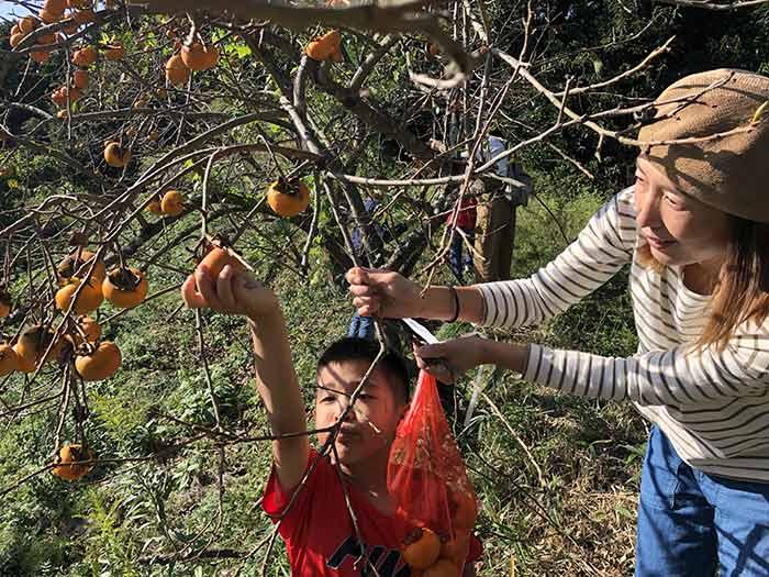 柿狩り体験
