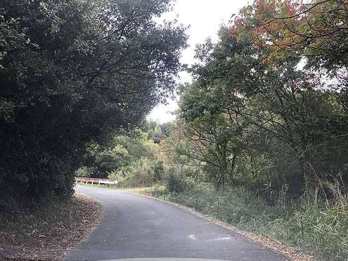 淡路島の森の中の道