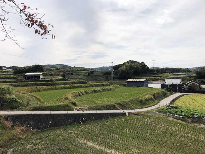 生田村の裏にある棚田
