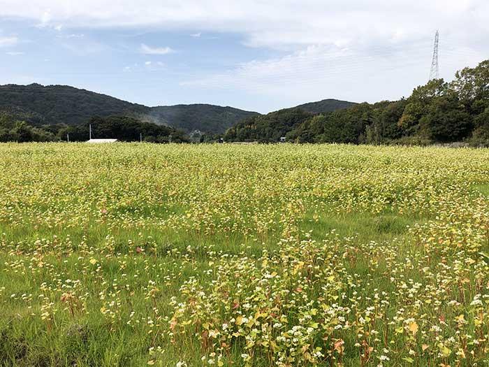 生田村のそばの花