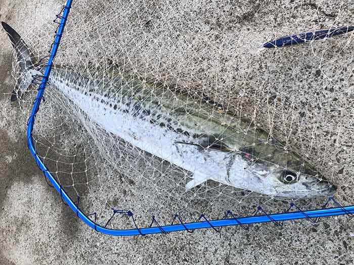 セットアッパーでサワラを釣る