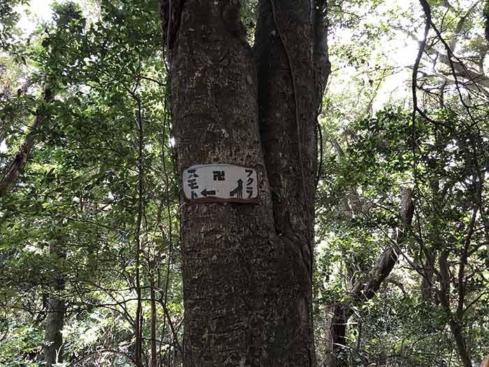 案内板が付いた木