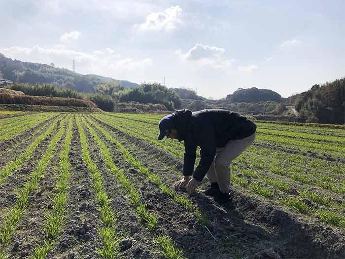 小麦畑で作業
