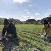 淡路島・小麦づくり2021 #01|見た目は雑草ですね。まずは、草引きから〜😁