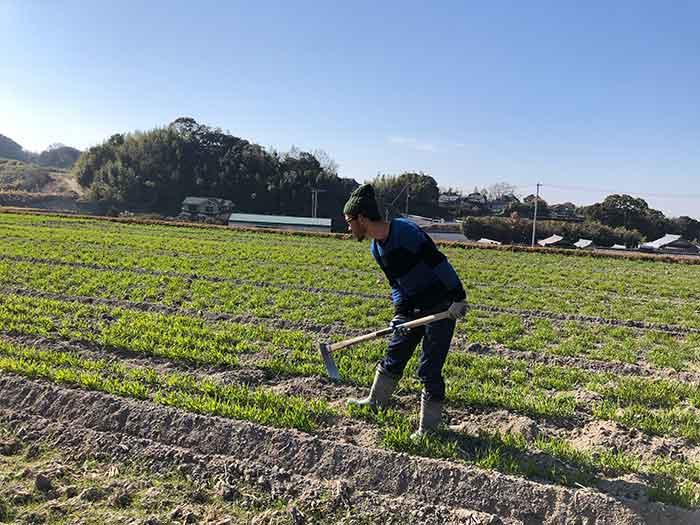 小麦畑でお仕事