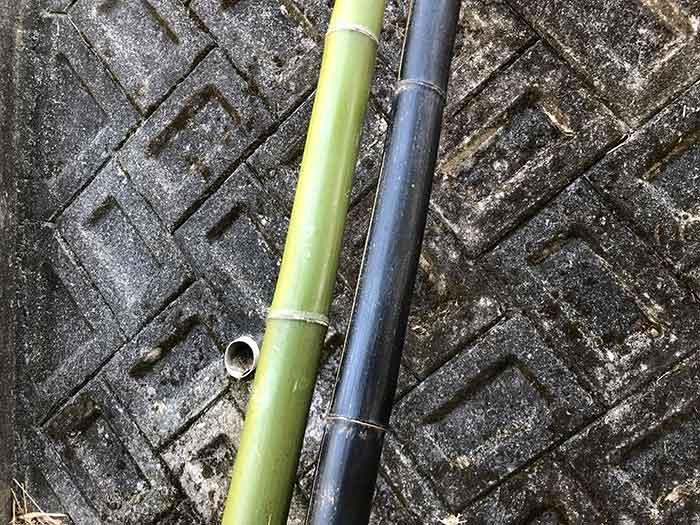 普通の竹と黒竹