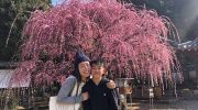 淡路島・摩利支天尊の枝垂れ梅を観てきました〜😁