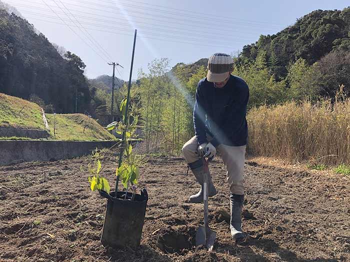 アボカドを植える