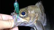淡路島でアジ・メバル釣り❗️久しぶりに魚の顔を見られました〜😆