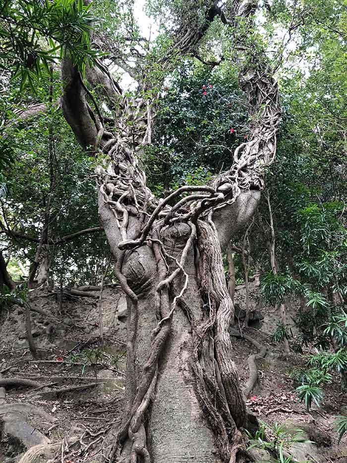 自然のパワーがすごい木