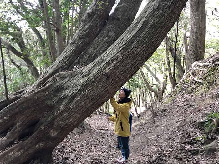巨木と話す奥さん