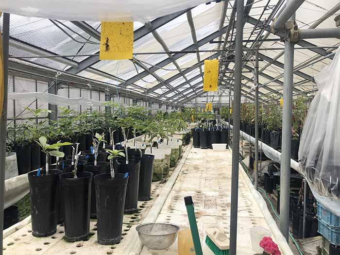 アボカド栽培のビニールハウス