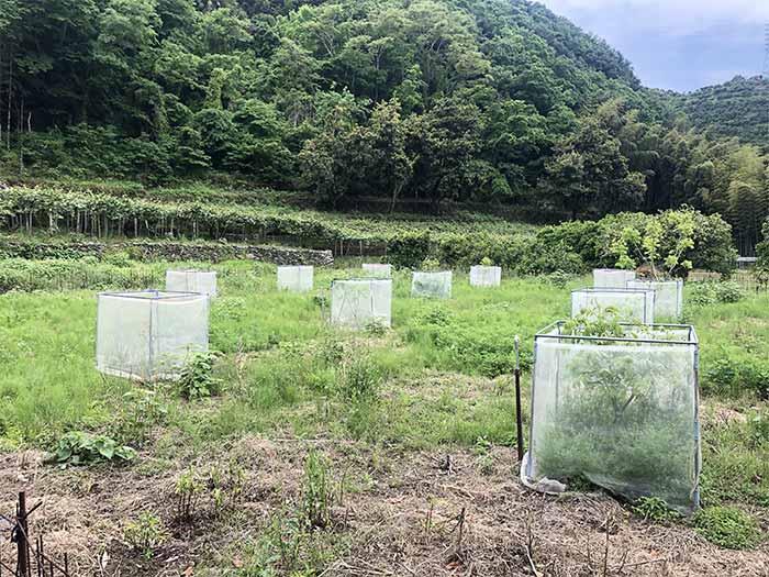 アボカド農園