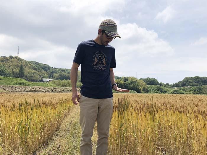 小麦の背の高さは腰まで