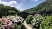 淡路島・あわじ花山水2021❗️今週から紫陽花(アジサイ)が見頃を迎えたそうですよ〜😊