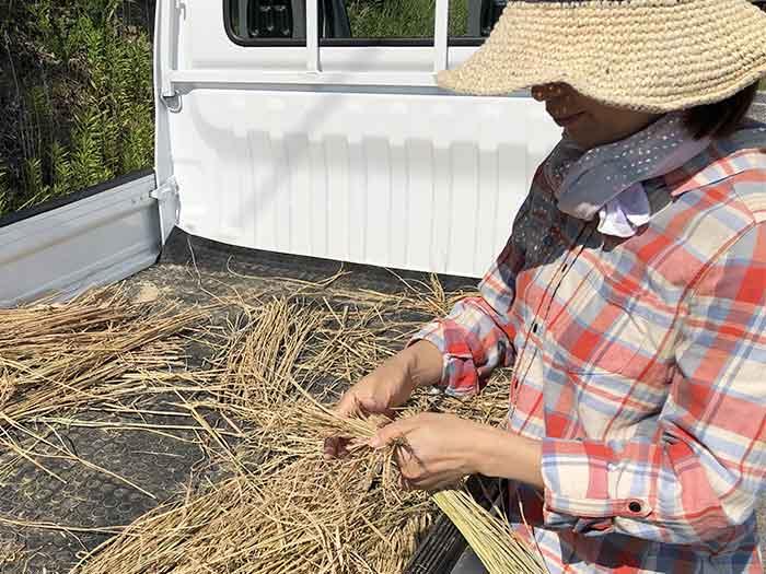 お米の藁を結ぶ