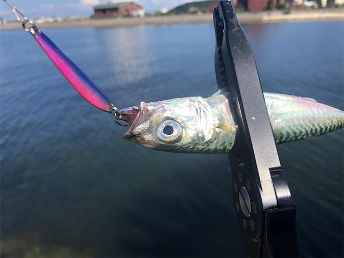 プラバーで小鯖が釣れた