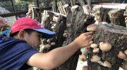淡路島で原木椎茸狩り体験観光❗️七輪でその場で食べられるよ〜😋【土日限定・要予約★10月24日まで】