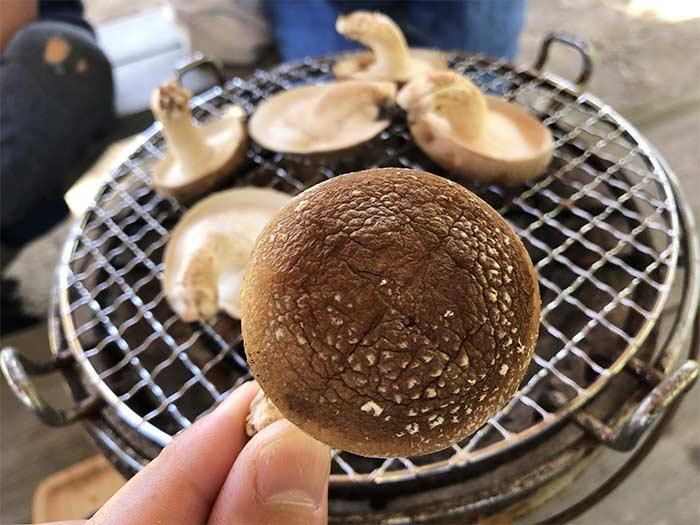 原木椎茸を七輪で食べる